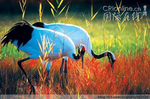 【转载】【原】一个真实的故事 - 海边的草 - 海边的草的博客