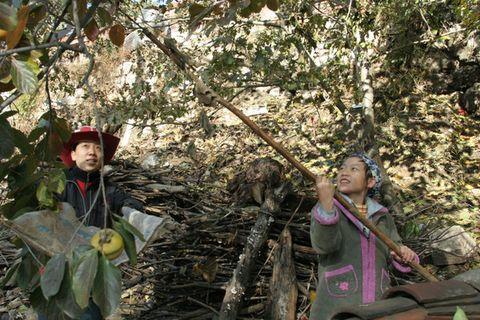 (原创)北京还有24户人家的村子--香屯 - 亮月 - 亮月的冠军之路