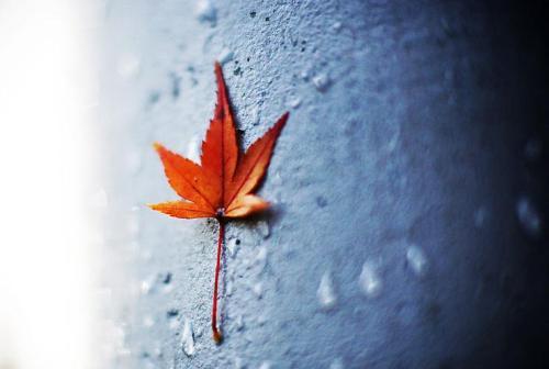 【晨曦诗歌】我是你一片遗落的叶子 - 晨曦 - 晨曦博客