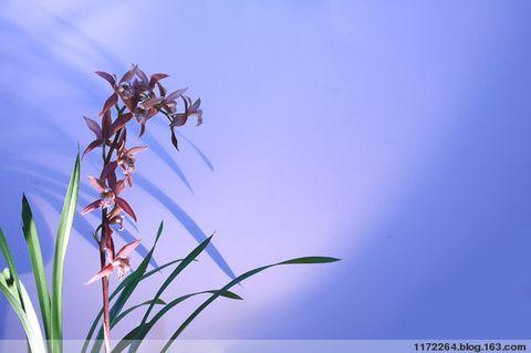 相机白平衡的创意应用 - 春  雨  润  大  地 - 春 雨 润 大 地