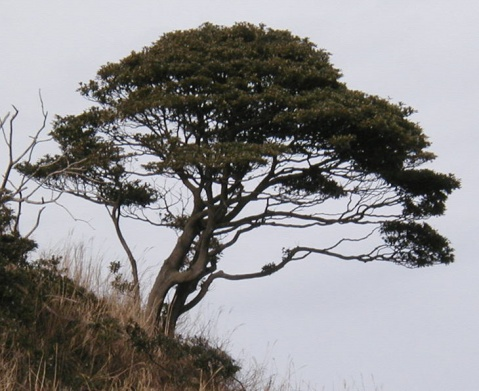 各种各样的树 - 好心情的日志
