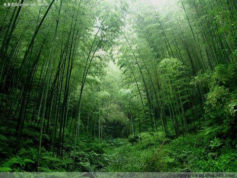 求雨山的竹 - 竹影扫阶 - 求雨山书画博客