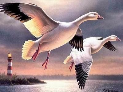恩爱夫妻精彩瞬间图欣赏 [图文] - 心灵之约 - .