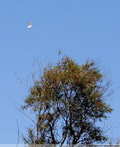 (原创图文)回归大自然的感觉——北大荒行之二 - lanlingdai123 - 蓝领带de博客