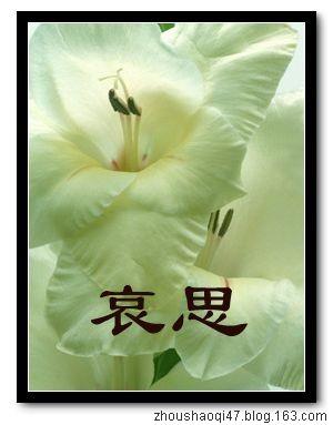 哀思(为5.12死难者致哀) - zhoushaoqi47 - 我的博客