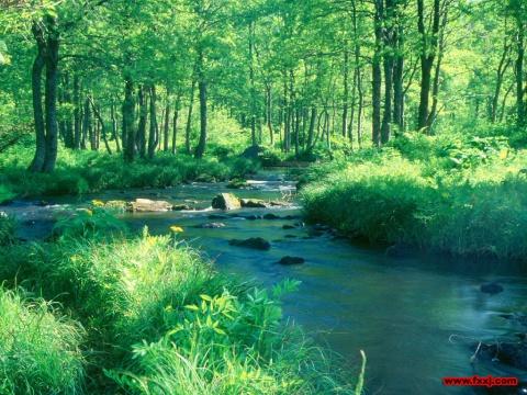 如水清澈 - 真水无香  - 香格里拉 花开的地方