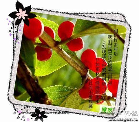 最美的思恋 - xiaoxin - 小心的天堂,有风,有雨,有阳光还有