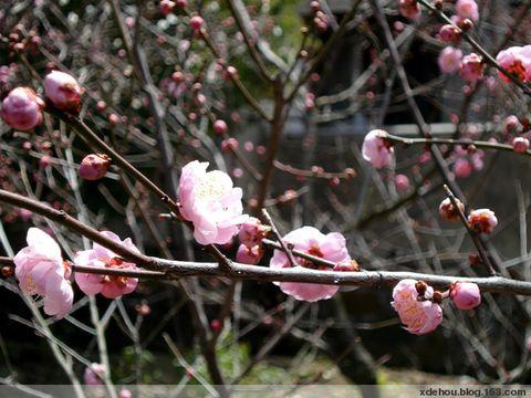 2009年3月6日 - 卓三 - 卓三的博客