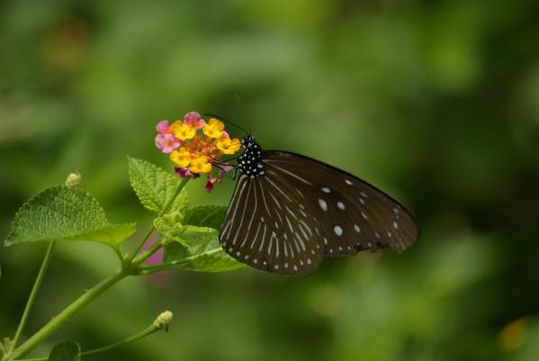 【原創】森林內美麗昆蟲生態 - B 哥 - B 哥的博客