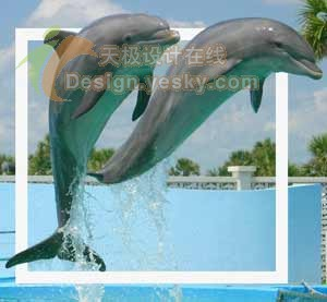 用Ps跃出照片的海豚 - 迎春 -