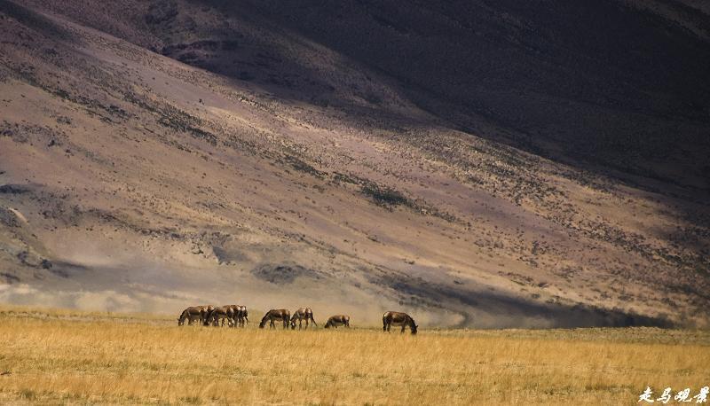追梦阿里___帕羊,通往阿里的重镇 - 西樱 - 走马观景