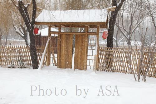 大雪纷飞中游柳荫公园 - 懒蛇阿沙 - 懒蛇阿沙的博客