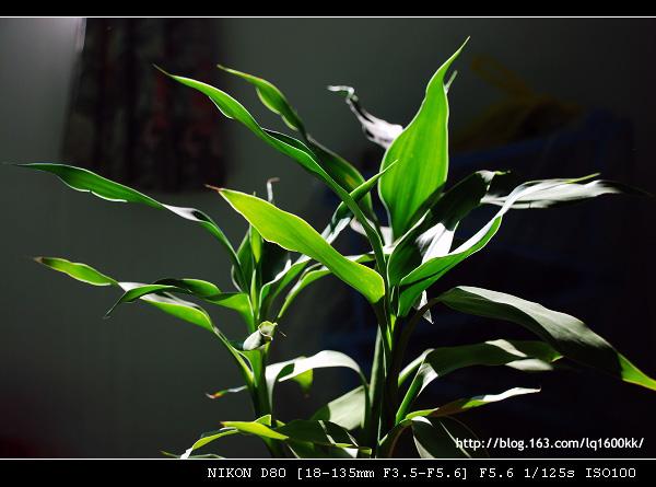 花卉摄影习作(1)——绿肥红瘦 - lq - LQ的博客