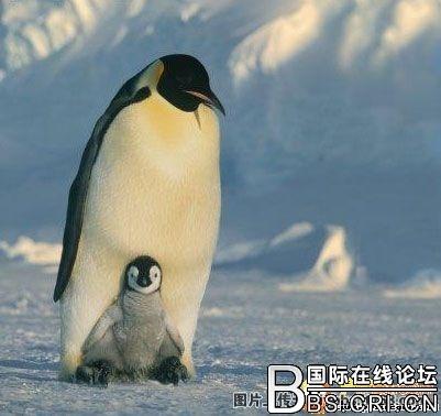 【转载】伟大的母爱(转) - ksw13862865411 - 乐乐梦想多多