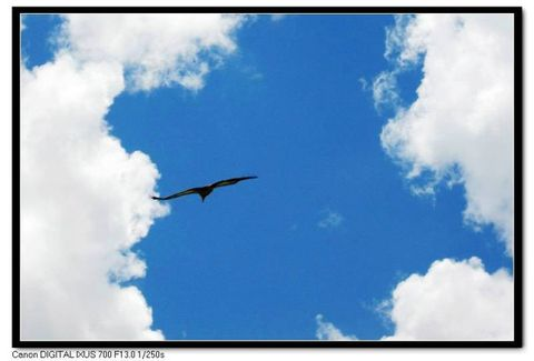 青海之旅------草原秃鹰(原创) - 青稞 - 青稞博客