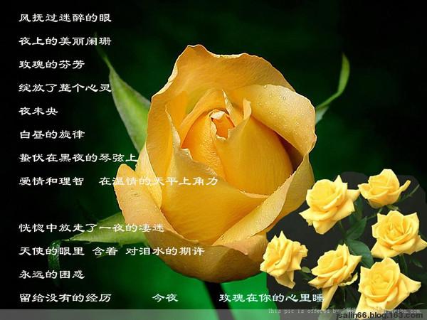 黄玫瑰[转转] - 依岸凝眸 - 听雨的快乐