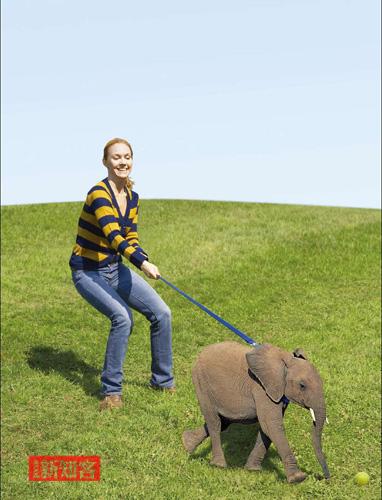 家有小象 - 《新知客》杂志 - 新知客