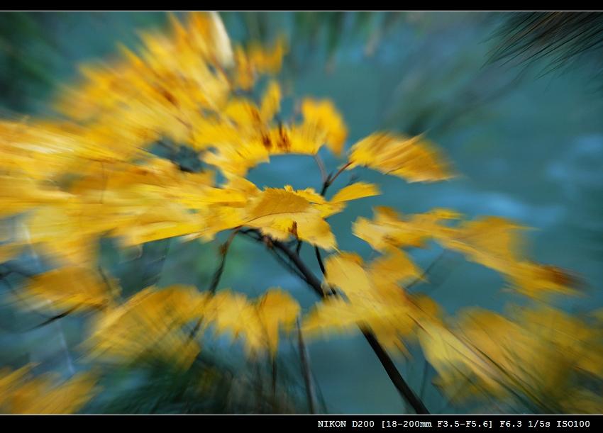 川西五朵金花 - 西樱 - 走马观景