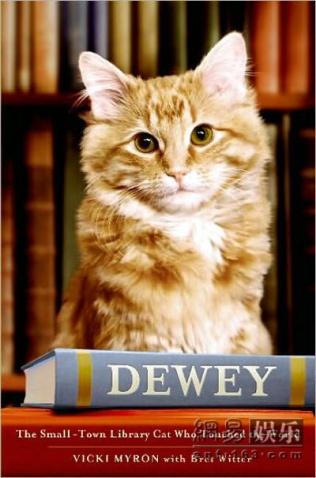 杜威图书馆猫 - 冰雨 - RainIce的博客