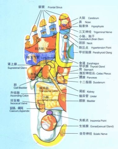 健身人体穴位图 - huyun67890的日志 - 网易博客 - 孟繁胜 - 孟繁胜的博客