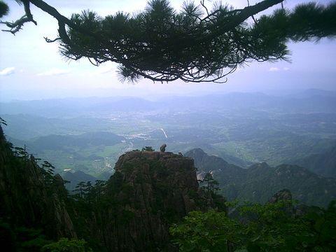 (原创)猴子观山 - 野狂人 - 好人园——和谐的家园