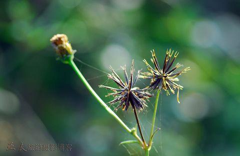 (原摄)初冬的花草 - 高山长风 - 亚夫旅游摄影博客