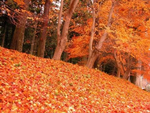 后庭宴.秋日暖阳  - 天山红叶 - 天山红叶的博客