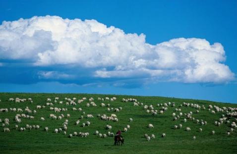 [原创] 欣赏《陪你一起看草原》 - 尘香 - 尘香的博客