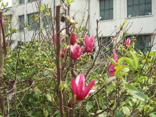 南县赏花 - 藏茶帝国 - 黑茶帝国的博客