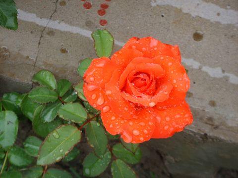 幸福像花儿一样   - 长城过滤纸板之家 - 沈阳市长城过滤纸板员工之家