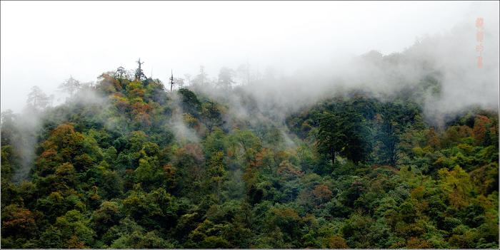 [原创]二郎山、康定——阴雨绵绵 - 迁徙的鸟 - 迁徙鸟儿的湿地