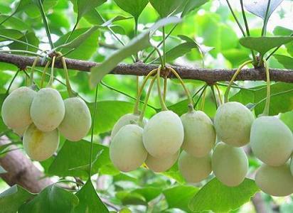 [转] 二十种五谷杂粮的药用价值(图文) - hubao.an - hubao.an的博客