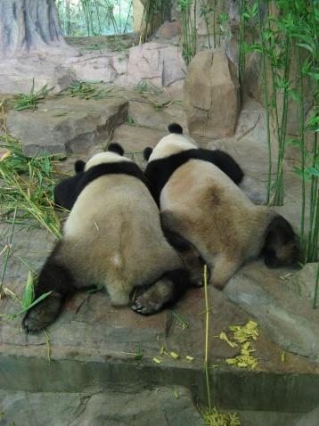 长隆番禺野生动物园
