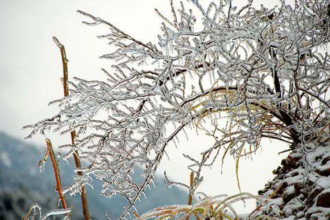 【原创】下雪啦 - 济南· 冬日暖阳 - 欢迎光临济南·冬日暖阳的原创屋