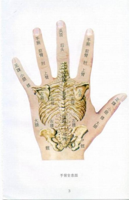 转载:人体全息图
