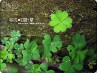 四叶草 - perown - 卓越天堂OutstandingsSky