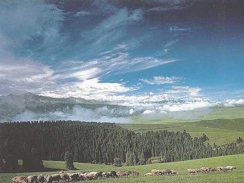 新疆乌鲁木齐南山景区:白杨沟