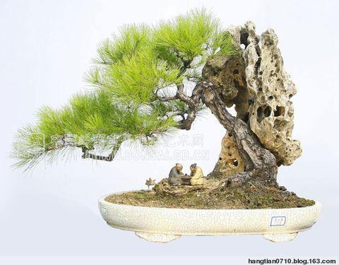 盆景 - 楚天 - lqp59(楚天)的博客