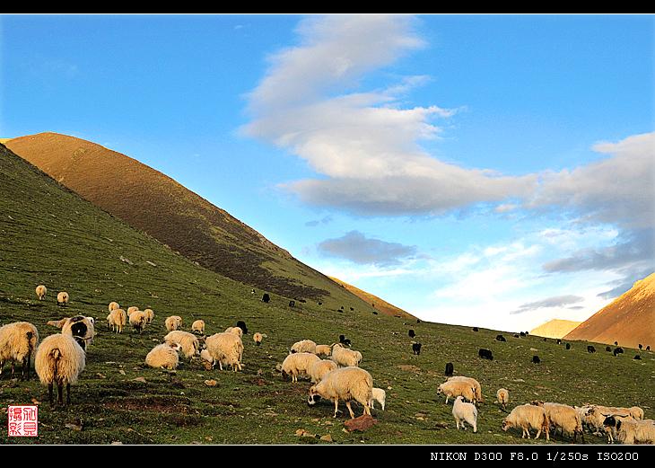 [原摄]山谷里的牧场(14P) - 加贝先生 - 加贝先生的博客