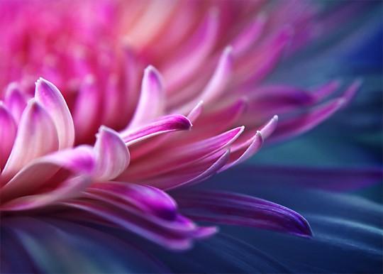 极美的花朵摄影照片(转) - 家长 - geshengbaba 的博客