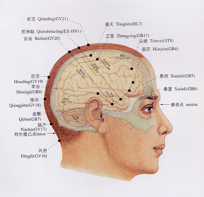:中医用图  骨骼系统图 - 一介烟民 - 一介烟民的博客
