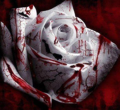 带血的玫瑰 - 精神,理智