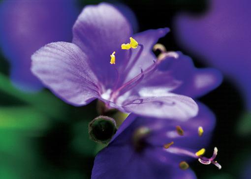 难得一见的花!  - bx-1010 - bx-1010的博客