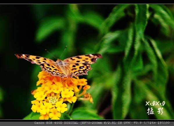 【小白试镜】微拍蝴蝶-花 - xixi - 老孟(xixi)旅游摄影博客