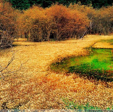《秋日丝语》 - 绿色源泉 - 绿色源泉