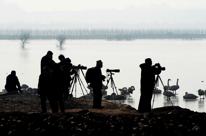 [原创摄影]湿地色影 - 无忌色影 - 行行摄摄