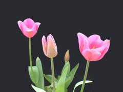 生日 Party - 别样天空 - 让生命如花儿绽放