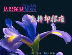 引用 秋实 博客图片收藏(待续) - 392032739 - 392032739的博客