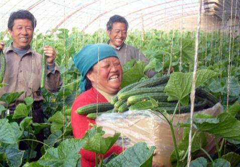 关于在大棚(拱棚)内使用GPIT技术的建议 - 江苏省丰谷种业有限公司 - 江苏省生态农业有限公司