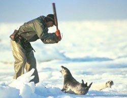 海豹寄給人類的一封信 - al老虎 - 活在过去